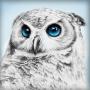 АЖ-1549 Взгляд совы