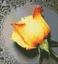 АЖ-18 Желтая роза